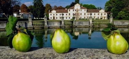 Mela cotogna e Villa Toderini